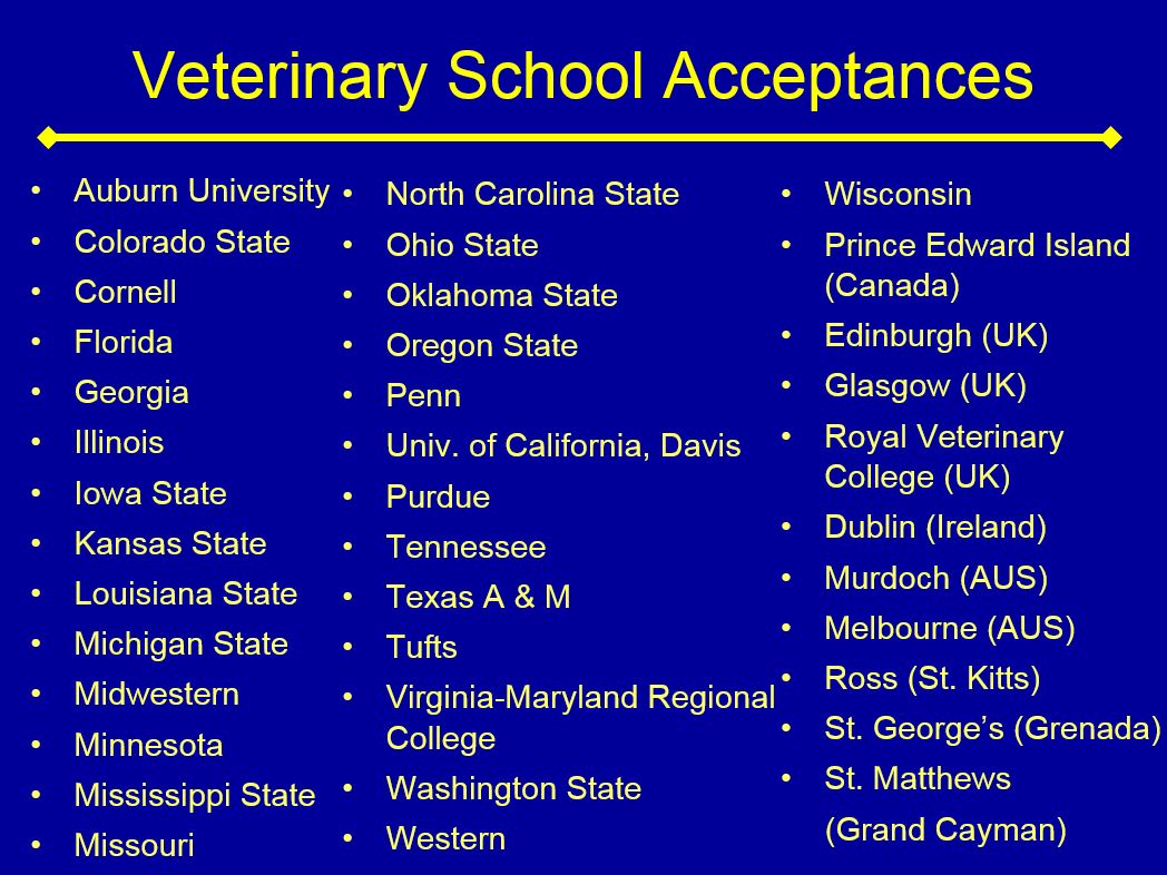 What subjects should you choose to become a vet?